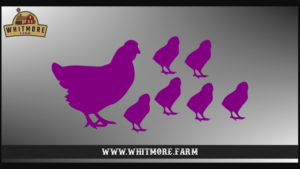 Chicken Family Purple