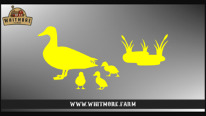Duck Family Yellow