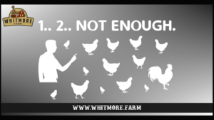 Not Enough Chickens White