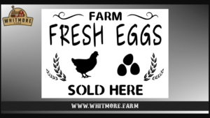 Farm Fresh Eggs Sold Here Stencil